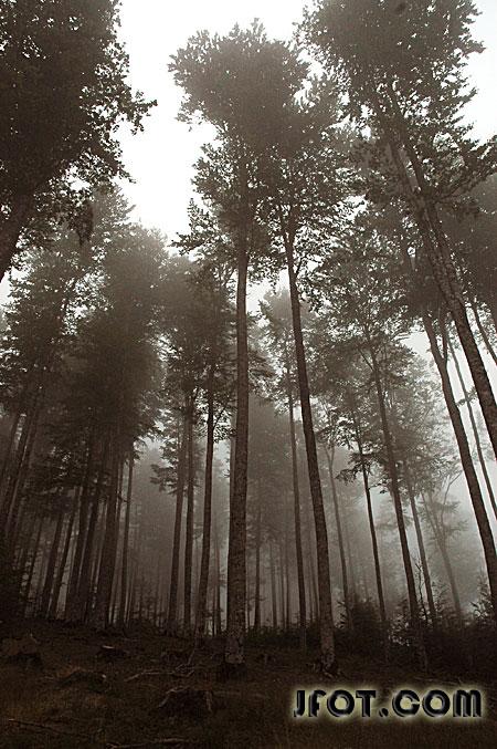 Niebla en Erlan